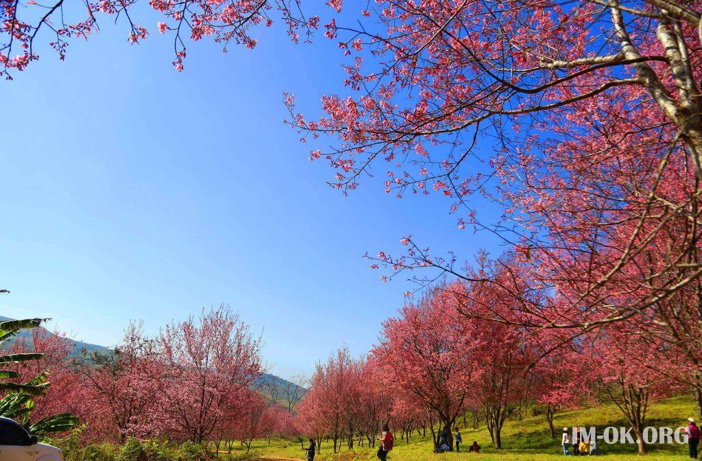 6 สถานที่เที่ยวจังหวัดเลย เมืองทะเลภูเขาที่ห้ามพลาด เราจะพาคุณไปสัมผัสความงดงามทางธรรมชาติของภาคอีกสานบ้านเรากัน ทั้งป่าที่เขียวขจี กราบไหว่